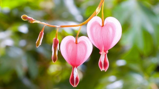 6916850-pink-heart-flowers